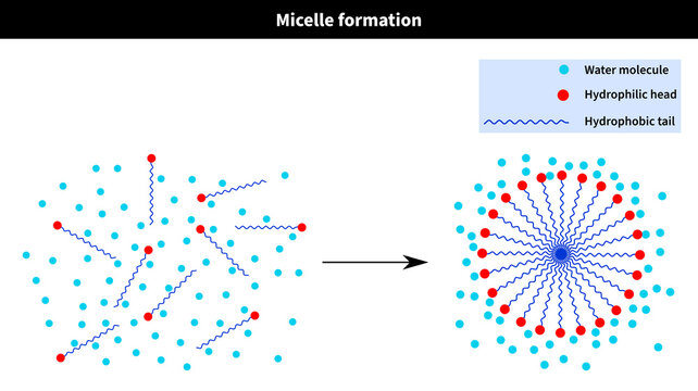 Micelle formation after critical temperature and concentration: water, h2o, hydrophilic, tail, hydrophobic, head, cation, anion, molecule