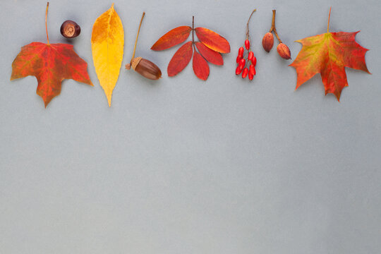 Autumn border composition with red fall maple leaves, nuts and berries