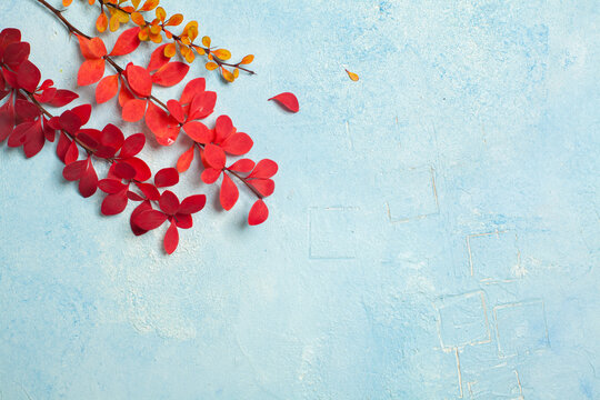 Fall composition with red autumn leaves on light blue stucco background with copy space