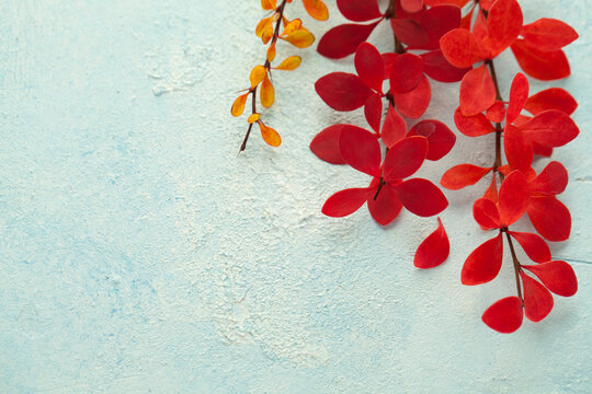Autumn card composition with red fall leaves on light blue stucco background
