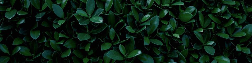 Wall Mural - closeup green leaf background. Flat lay, fresh wallpaper banner concept