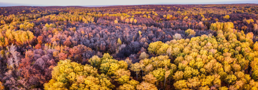 Aerial panoramic landscape view over yellow autumn forest with birch trees during sunset, Samara, Russia