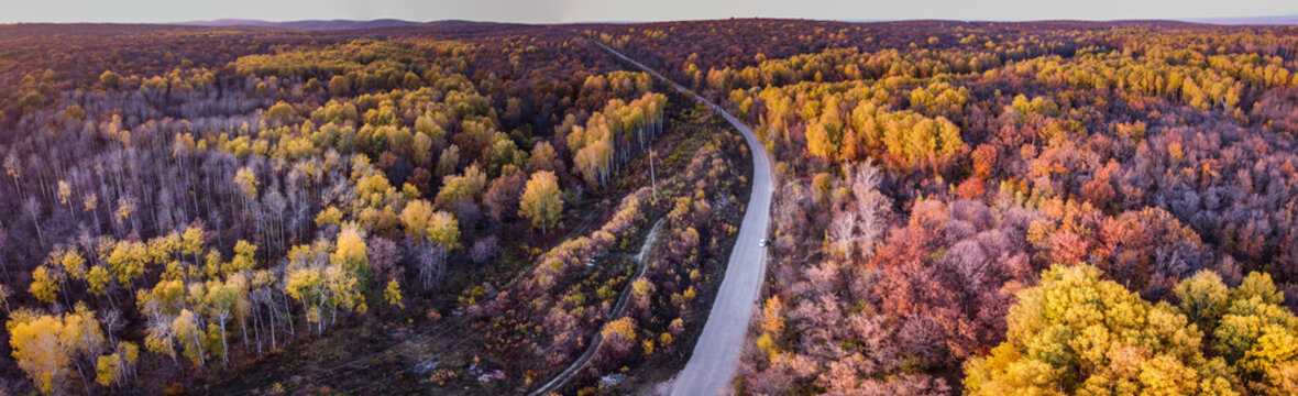 Aerial panoramic landscape view over yellow autumn forest with birch trees during sunset and empty road, Samara, Russia