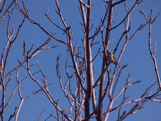 Fototapeta ptak zwierze natura dziki fauna obraz