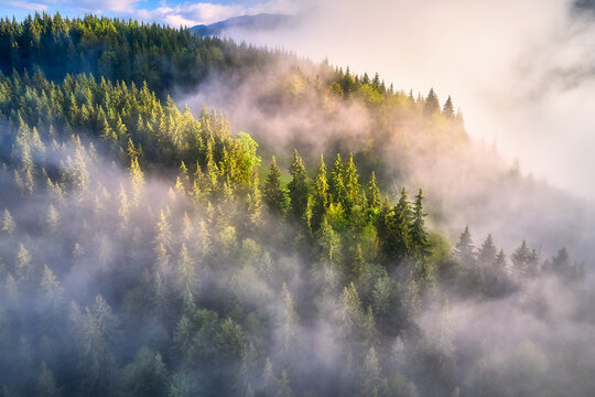Mountains in clouds at sunrise in summer. Aerial view of mountain slopes with green trees in fog. Beautiful landscape with hills and foggy forest. Top view from drone of mountain woods in low clouds
