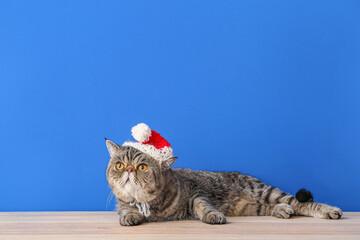 Photo sur Plexiglas Dinosaurs Cute exotic shorthair cat in Santa hat near color wall
