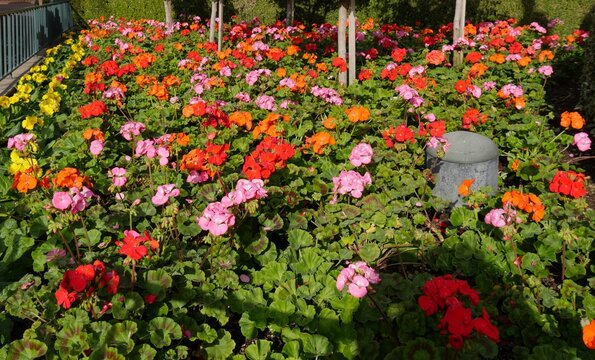 Colorful small flowes in pots at a roadside garden