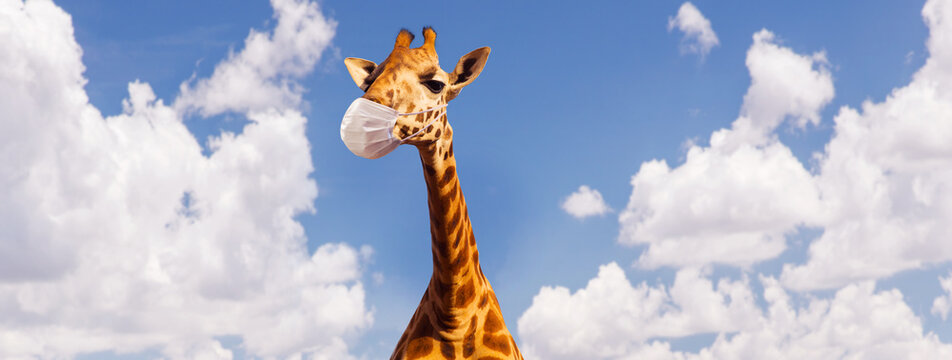 animal, nature and wildlife concept - giraffe wearing face protective medical mask for protection from virus disease ove blue sky on background