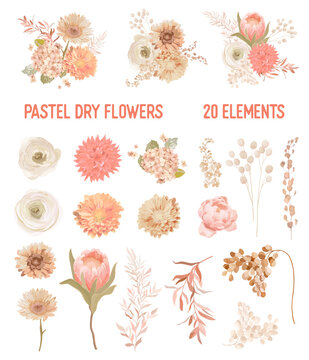Elegant Vector Dry Flowers, Protea, Pale roses, Eucalyptus, Dried hydrangea, Dahlia, floral elements. Trendy winter