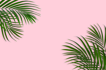 Wall Mural - top view of tropical palm leaf on pink color background. minimal summer concept. flat lay