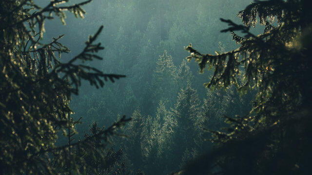 High angle view of trees and valley