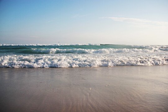 naturaleza viajes plantas animales aventura deportes mar surf