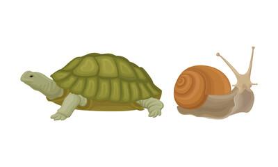 Fototapeta Huge Turtle and Snail as Reptile Vector Set