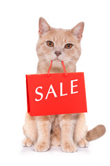 sale shopping cat