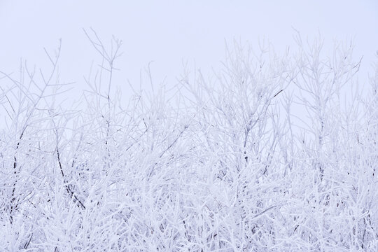 Rime ice over a tree
