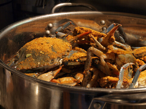MD blue crabs in pot - live