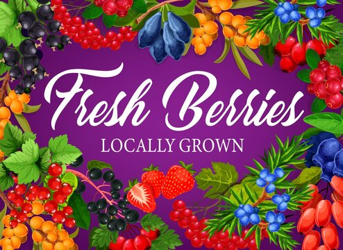 Berry fruits poster of raspberry, blackberry and strawberry, vector forest and farm food dessert. Berries harvest of blueberry, sweet cherry and juicy cranberry, buckthorn, redcurrant and bilberry