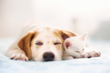 Photo sur Plexiglas Dinosaurs Cat and dog sleeping. Puppy and kitten sleep.