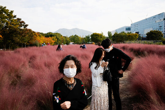 People enjoy a pink muhly grass field at a park in Hanam