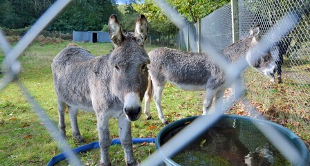 Beautiful donkey in a field