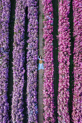 Wall Mural - Aerial view of beautiful girl in Margaret flowers fields.