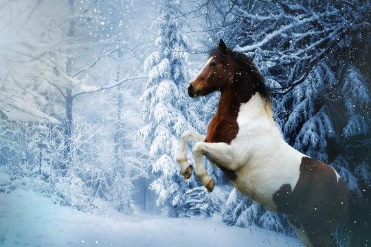 Steigendes Pferd vor verschneitem Wald