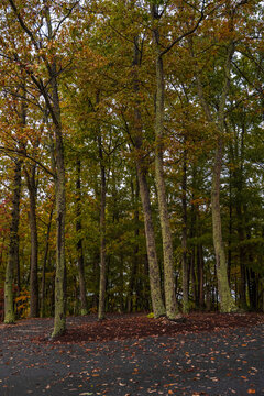 Vertical Landscape Photo at the Edge of the Forest