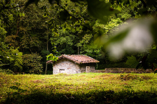Rural building with red tiled roof hidden in a misty forest