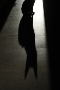 Dark and ominous cat picture