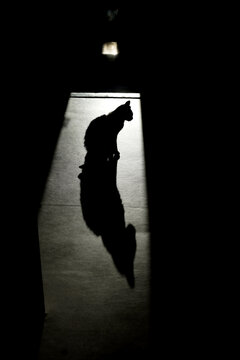 Cat and shadow on the floor