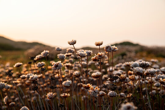 Wild flowers at sunset