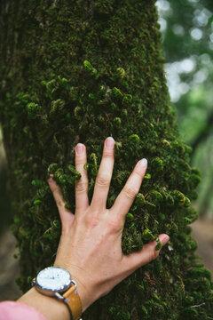 Hand Touching Moss On A Tree