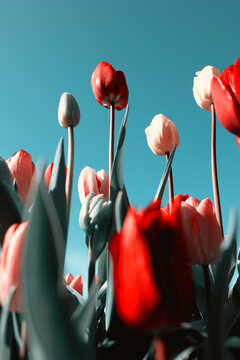 Looking up at tall tulips and blue sky