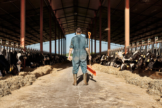 Farmer holding shovel while standing in cattle surrounded by herd of cows