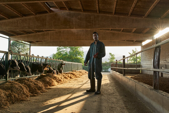 Farmer standing by cows in shed at farm