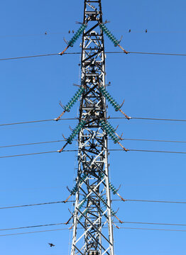 Energetic pylon with a lot of starlings