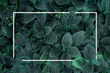 Wall Mural - tropical green leaves with white frame, nature flat lay concept