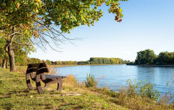 Bank am Rhein-Damm in der Natur