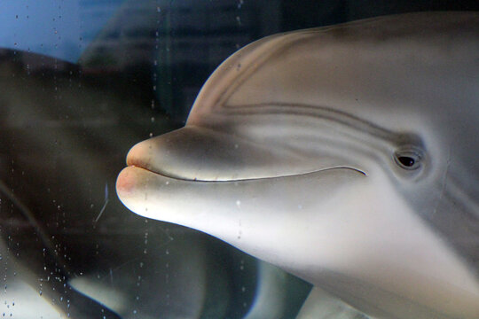 Robot dolphin could signal end of captive animals