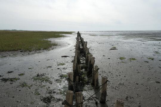 Wattenmeer, bei Ebbe,Strasse zur Insel Mando, Traktortouren, Jütland, Dänemark