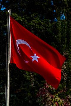 Red Turkish Flag, portrait