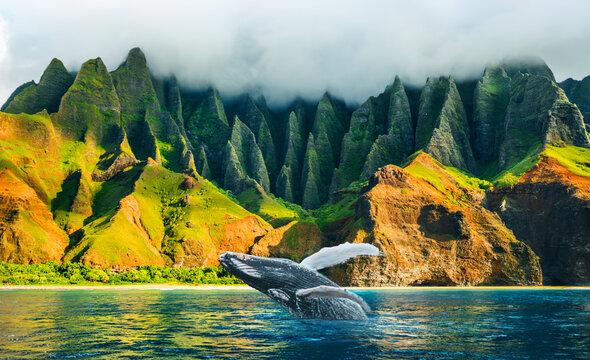 Whale watching sunset cruise tour at Na Pali Coast, Kauai island, Hawaii travel destination. Amazing breaching humpback whale from water at Napali mountains landscape.