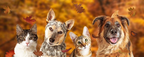 Photo sur Plexiglas Dinosaurs Autumn Dog and Cat Scene Web Banner