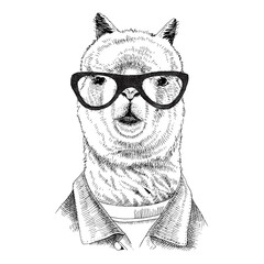 Hand drawn dressed up llama in hipster style