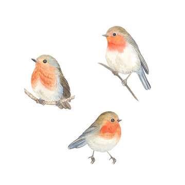 Watercolor Robin birds sitting on branches, set cute birds isolated on white background for your design card, wallpaper or textile.