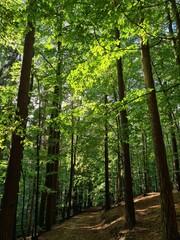 zielony las liściasty na pagórkowatym terenie w słoneczny dzień w pionie