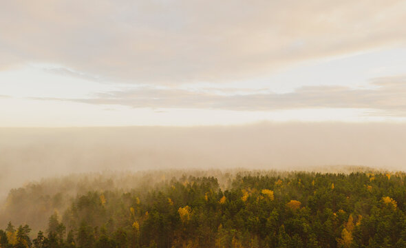 Aerial view foggy forest. Top drone view of fog forest in the morning forest. Wild mist nature background texture. Scenic misty woodland with fog