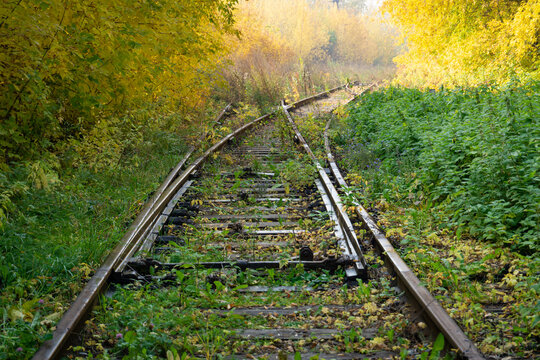 The rails of an abandoned railway are overgrown with grass. Railway track fork. The rails go into the misty autumn forest. Summer turns into autumn, green turns into yellow.
