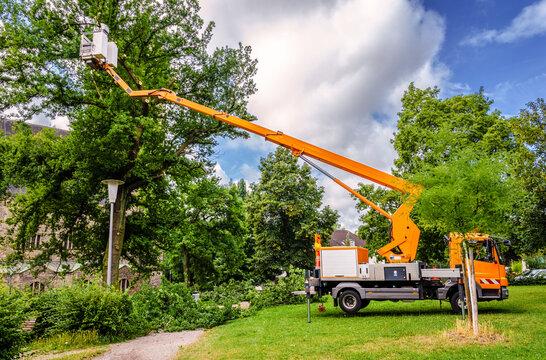 Baumrückschnitt in öffentlichem Park mit Hubsteiger – Tree pruning in a public park with a lifting platform