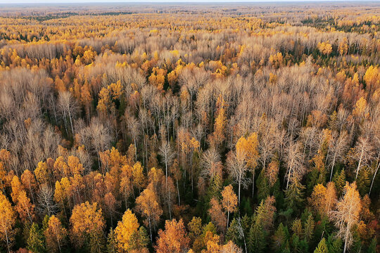 autumn forest landscape, view from a drone, aerial photography viewed from above in October park